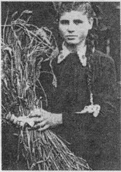 Сентябрь 1954 г. Со снопом ветвистой пшеницы.